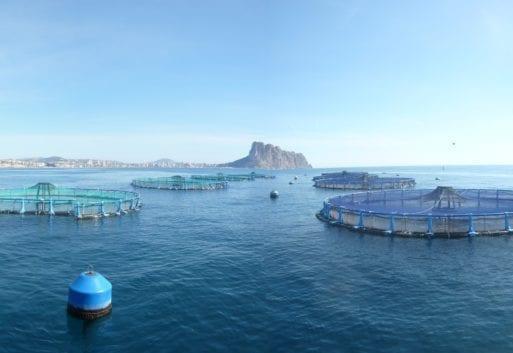 ¿Cuál es el impacto medioambiental de la acuicultura?