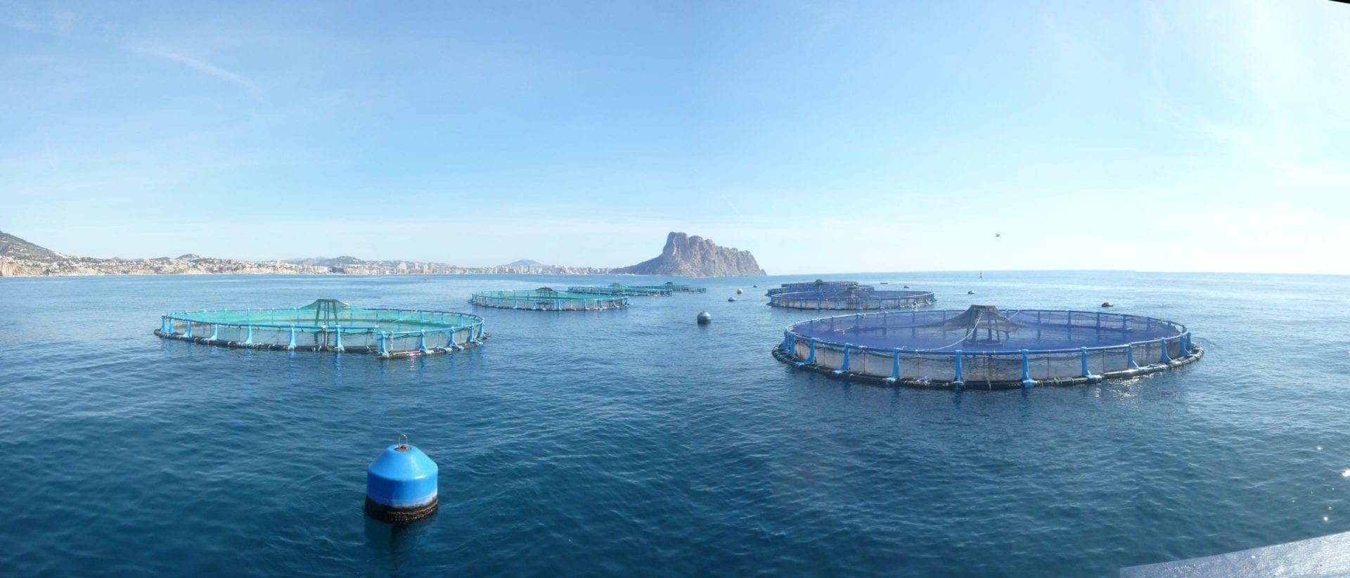 Viveros de acuicultura en el mar