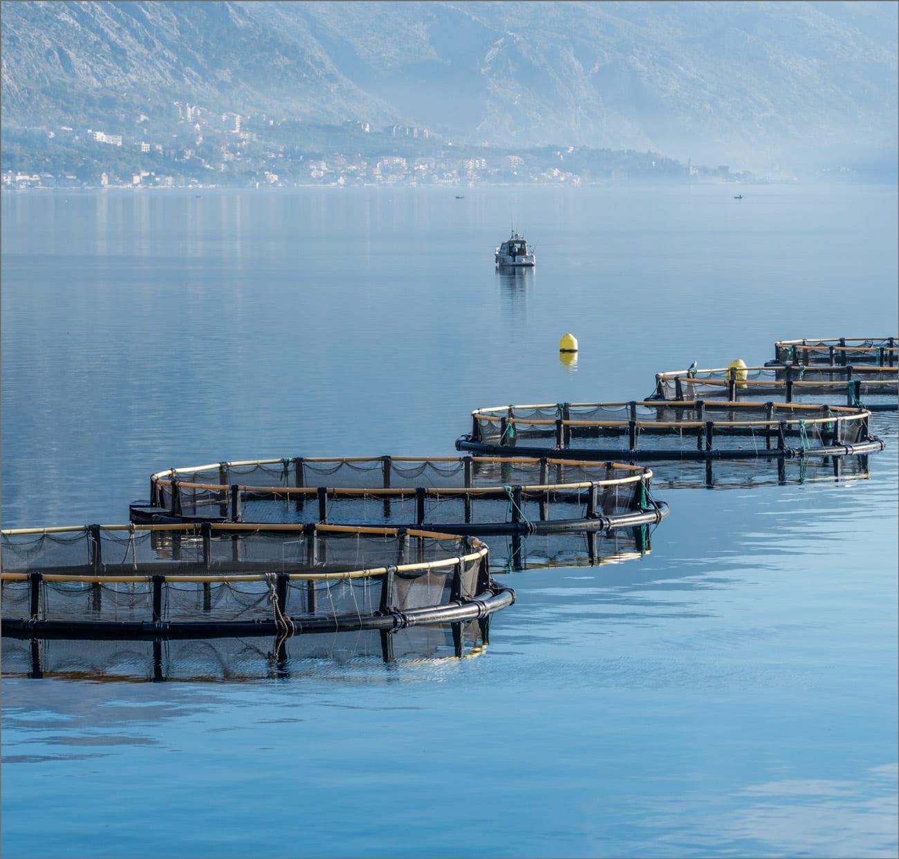 Viveros de acuicultura