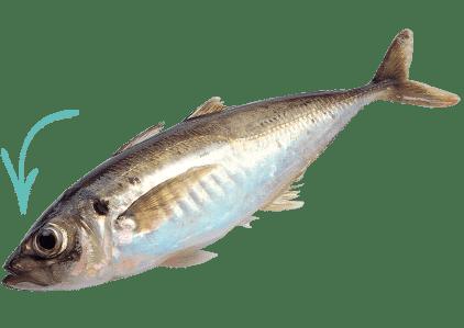 pez ejemplar
