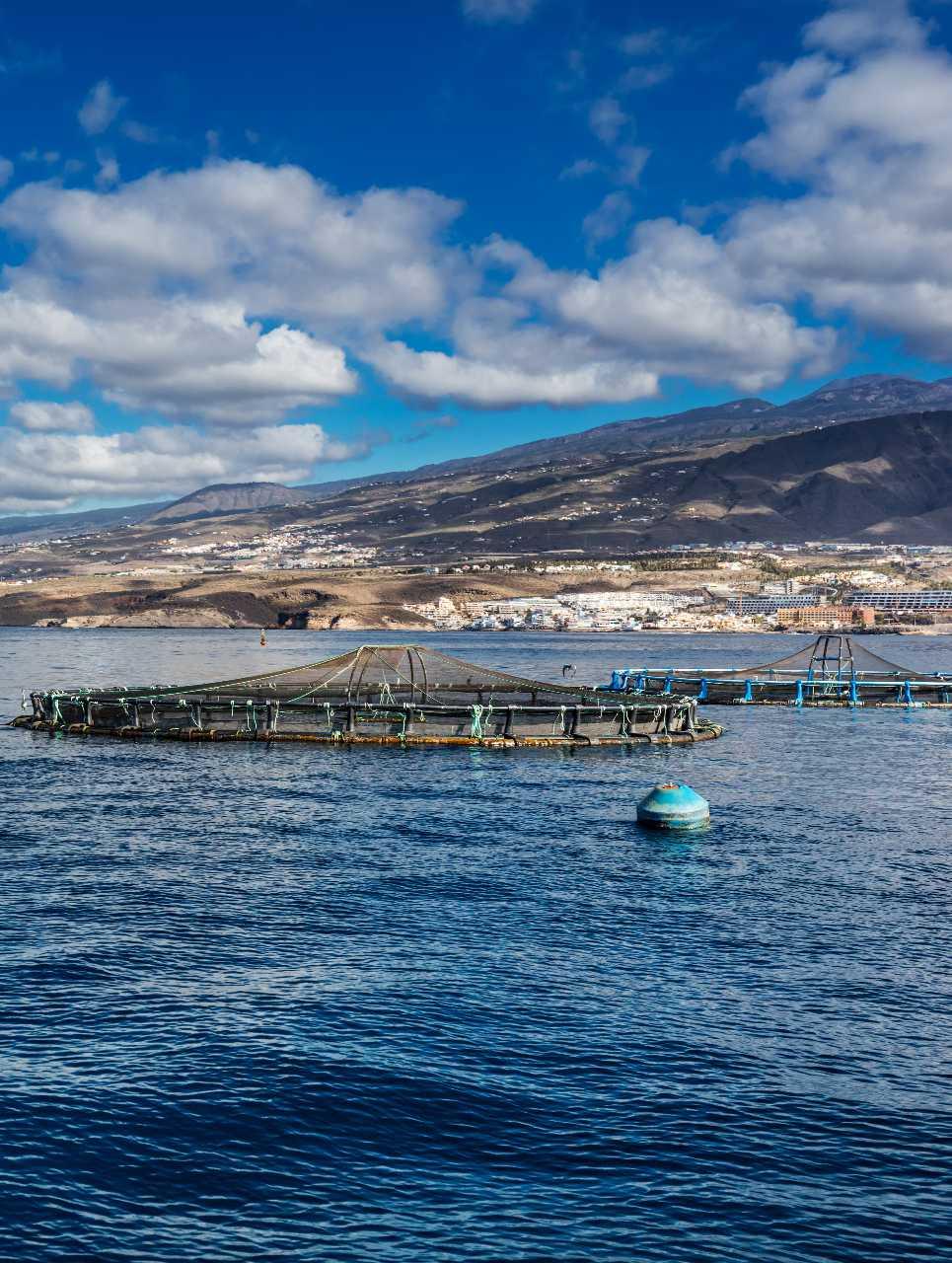 Acuicultura en el mar
