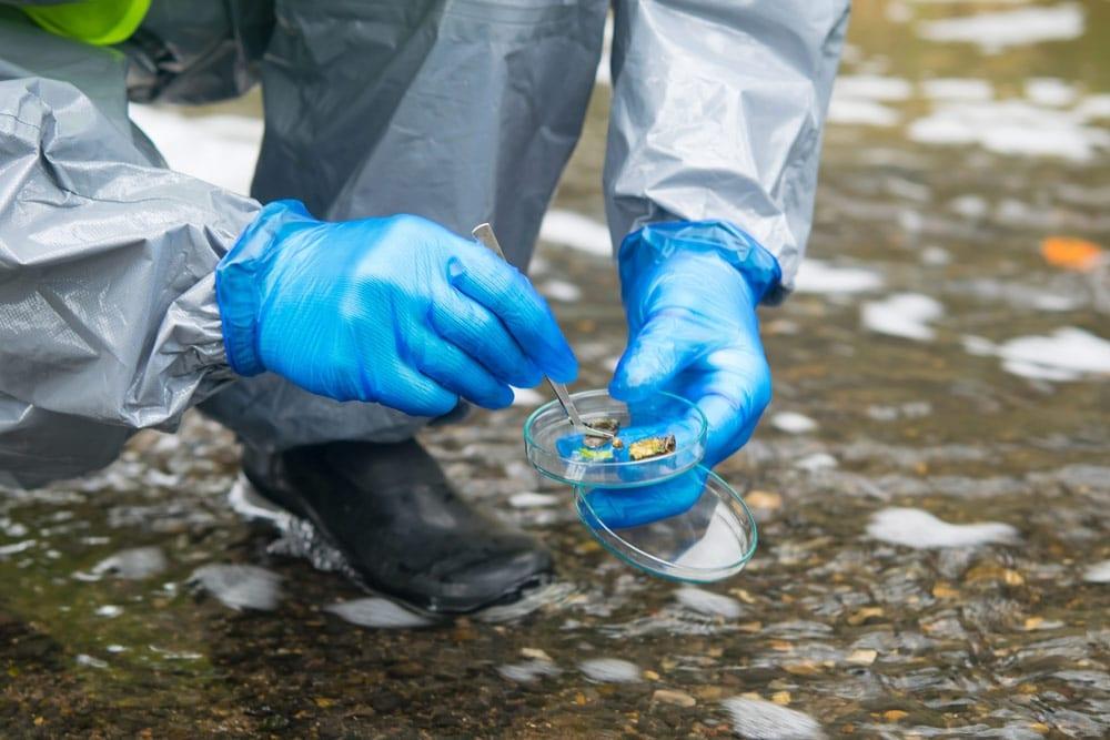 Innovación e investigación acuicultura