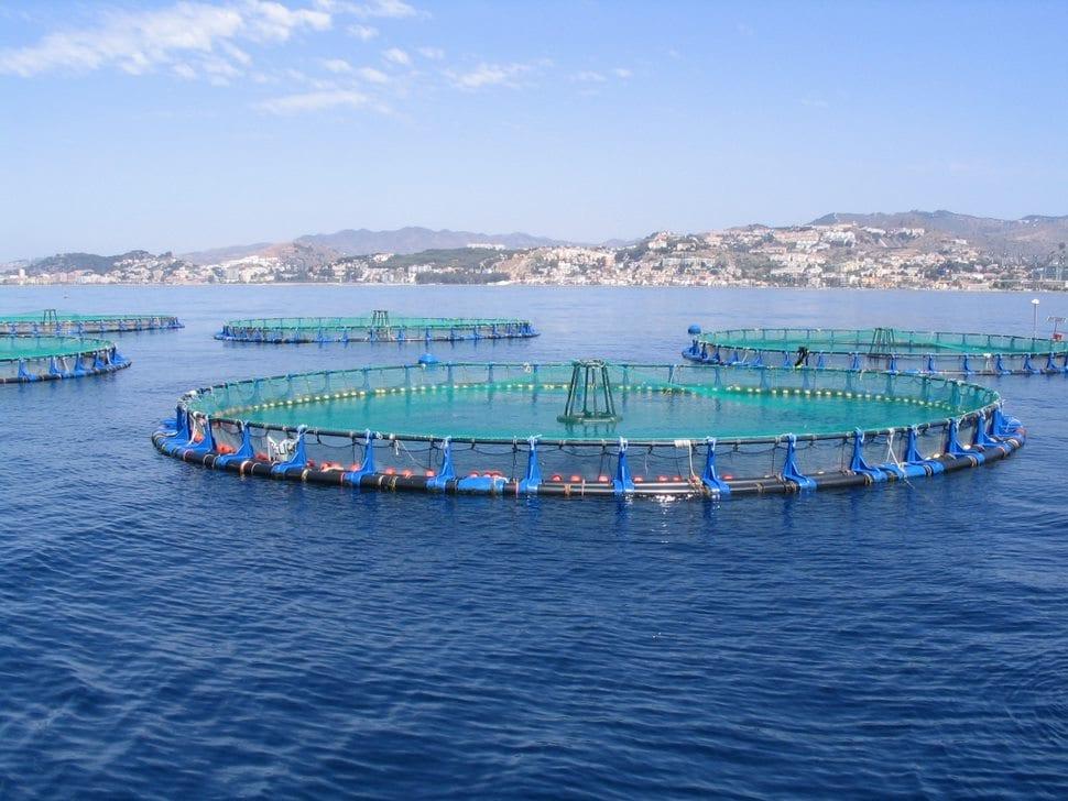 Vivero de acuicultura en alta mar