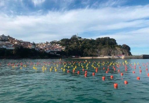 Algas: un superalimento cultivado de manera sostenible