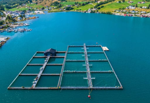 Por qué la acuicultura es sostenible