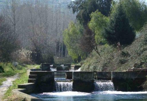 Acuicultura continental: el cultivo de especies de río