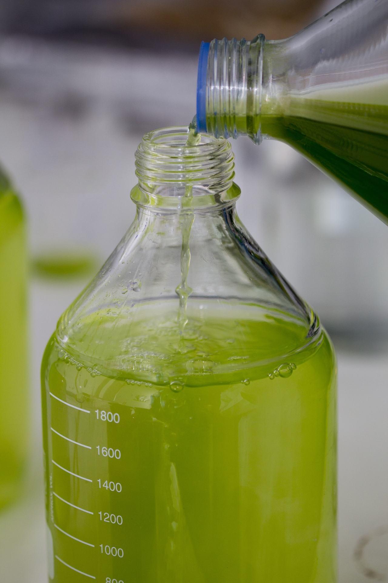 Microalgas en el laboratorio