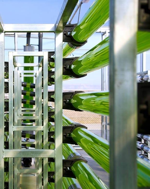 Producción de microalgas por acuicultura