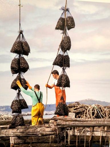 Trabajadores de acuicultura