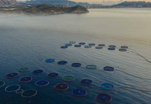 La acuicultura es seguridad alimentaria: descubre por qué