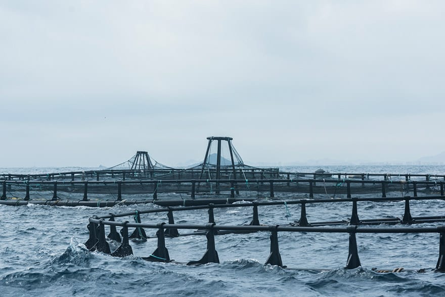 Acuicultura marina crecimiento azul