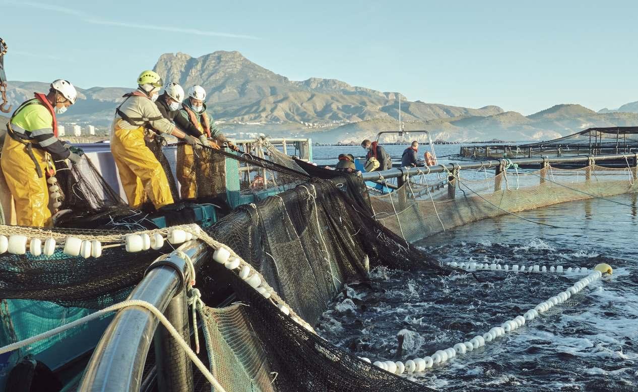 Trabajadores de acuicultura en medio del mar