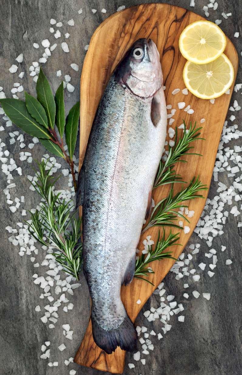 Trucha de acuicultura, especie de alta valor en Omega 3