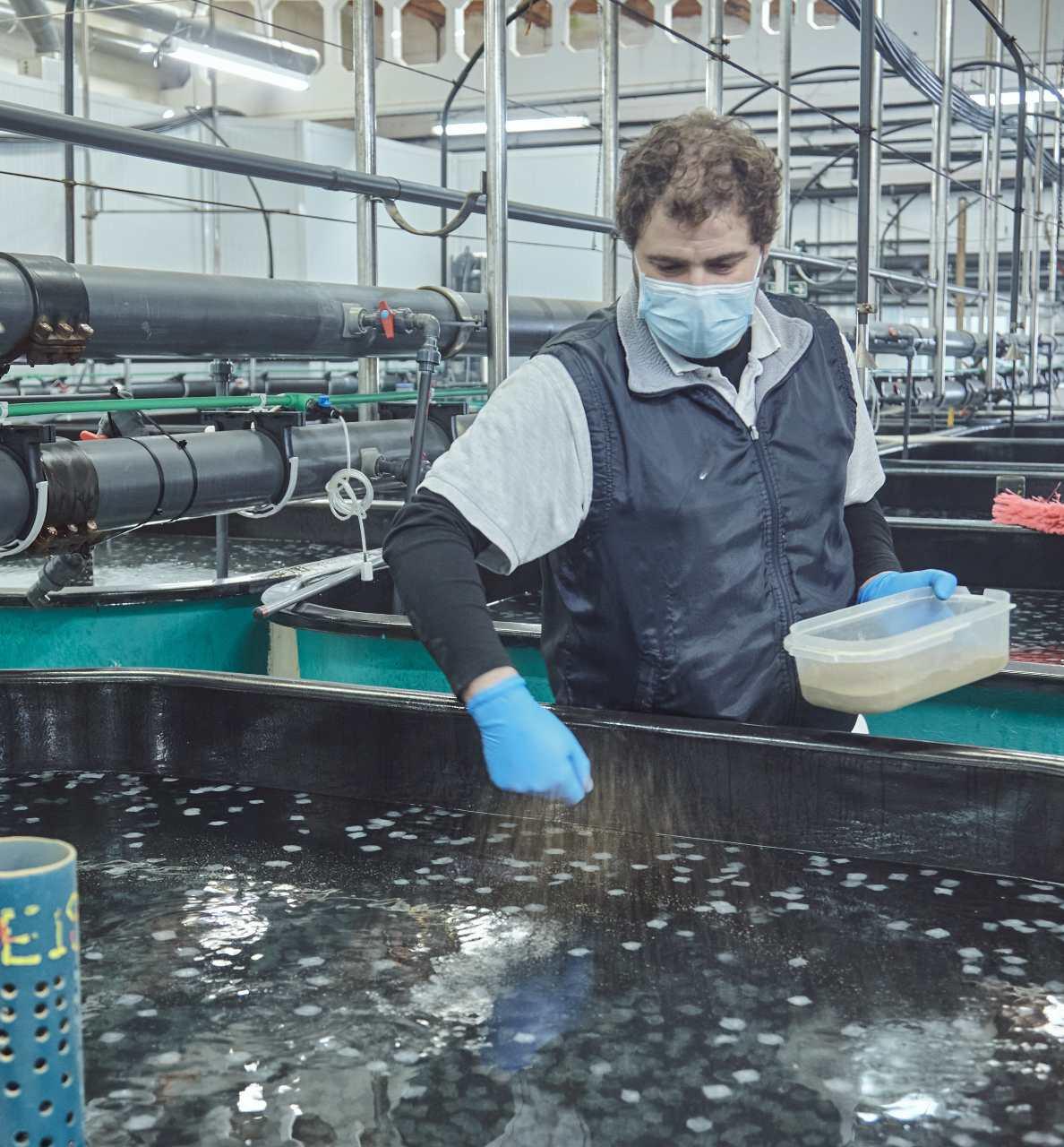 Un acuicultor alimenta a los peces