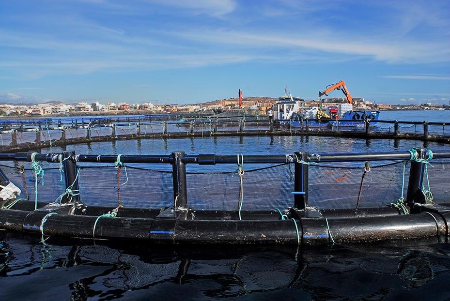 Vivero de acuicultura en el mar