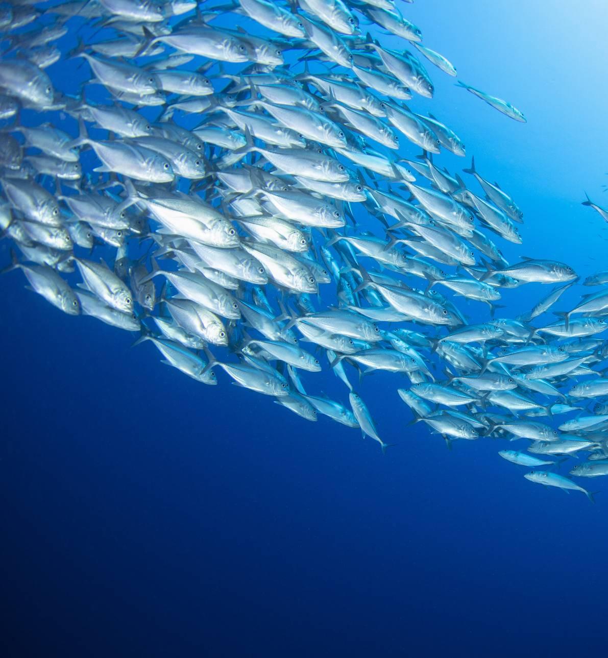 La COVID-19 en el ecosistema marino