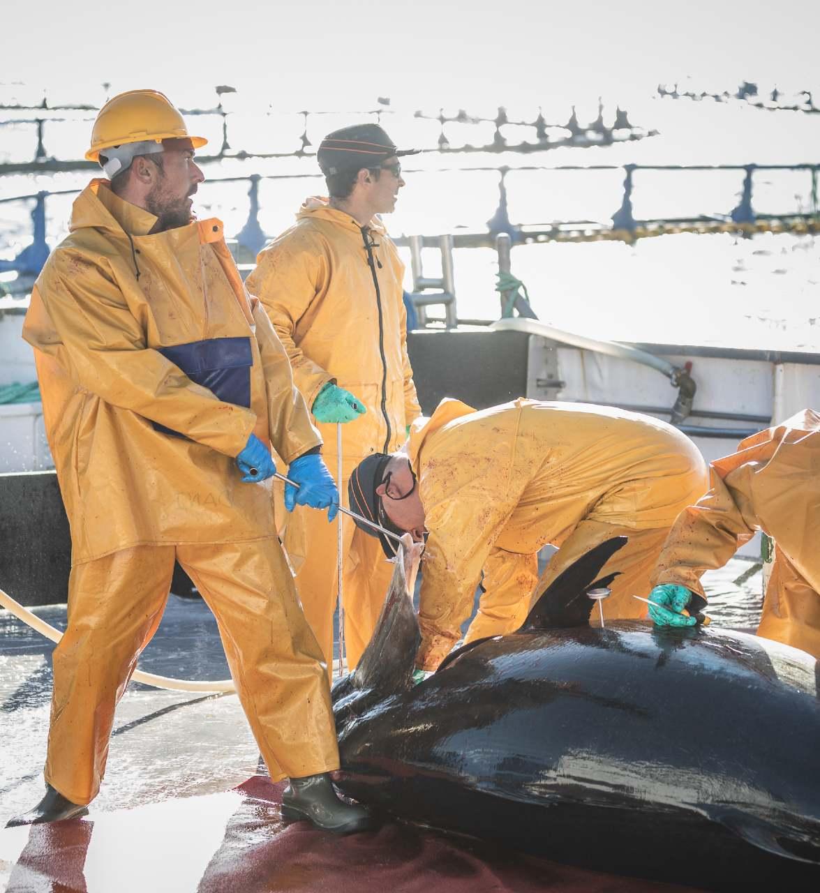 Vivero de atunes en Murcia