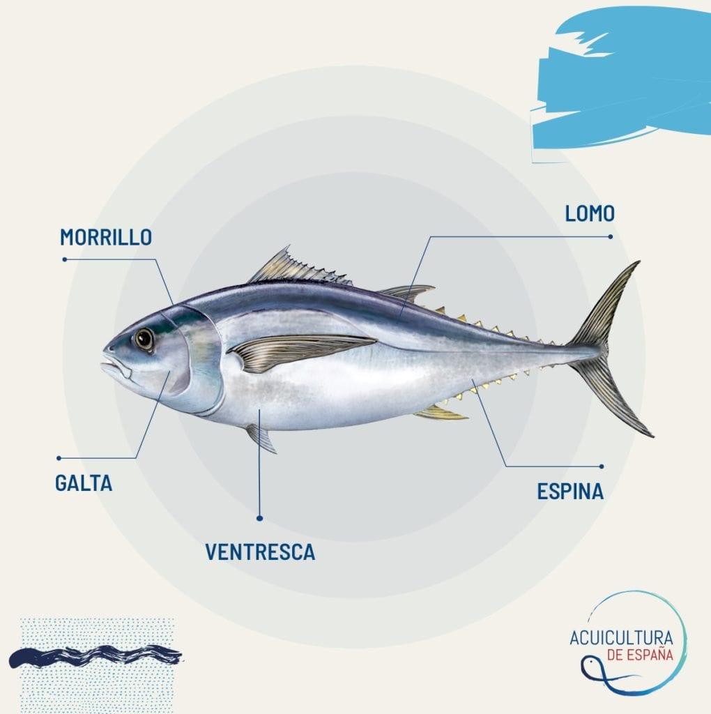 Partes del atún rojo de Acuicultura de España