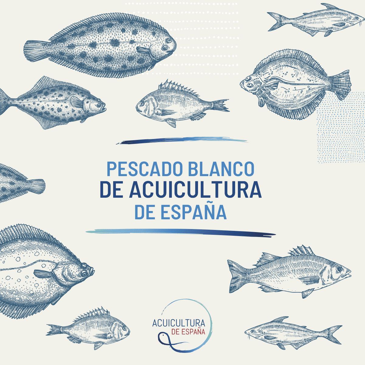 pescado blanco de acuicultura de españa