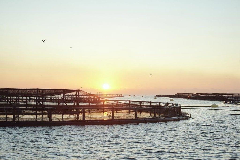acuicultura de españa maritima crecimiento azul