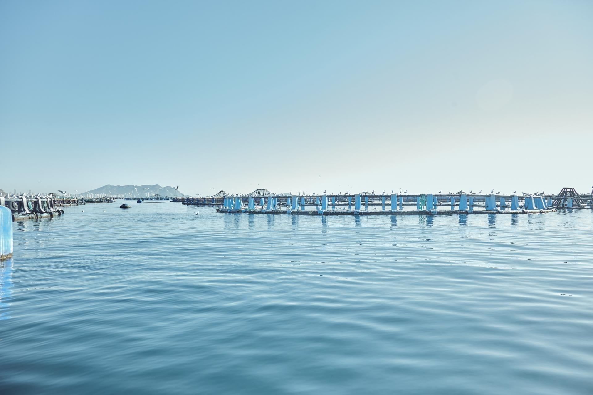 cultivo de seriola en acuicultura de españa