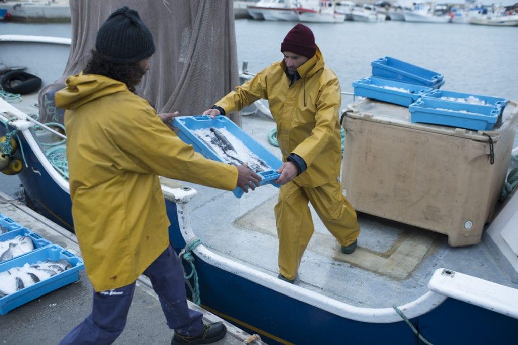 acuicultores con peces de acuicultura