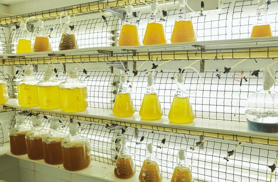 Hatchery acuicultura españa