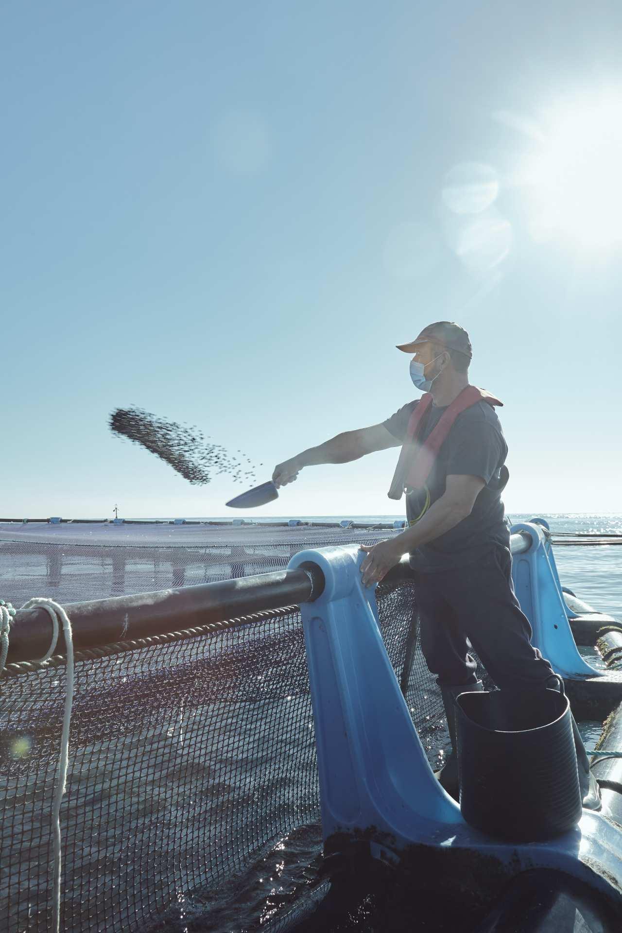 acuicultor de acuicultura dando de comer a peces