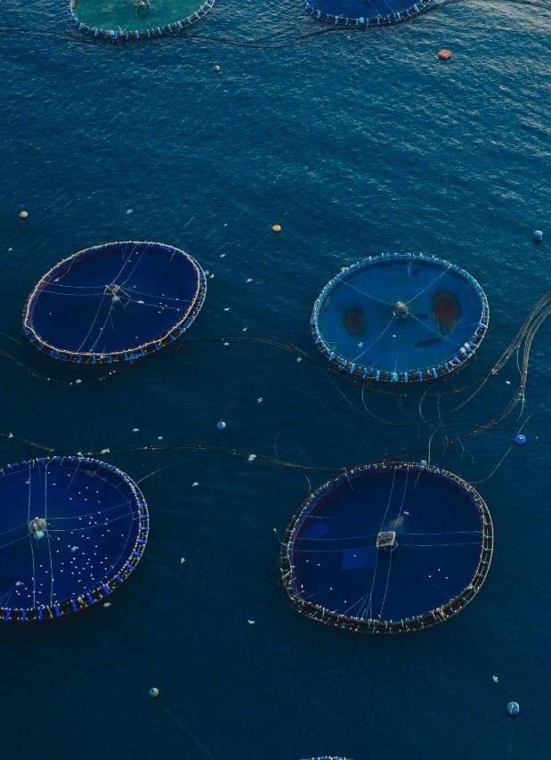 acuicultura de españa en el mar