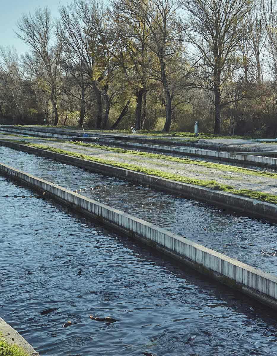 Acuicultura de españa en rios