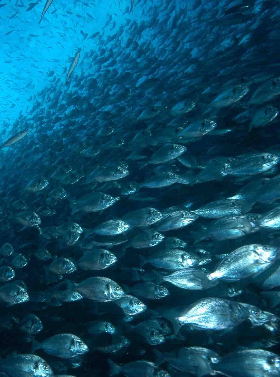 banco de peces acuicultura