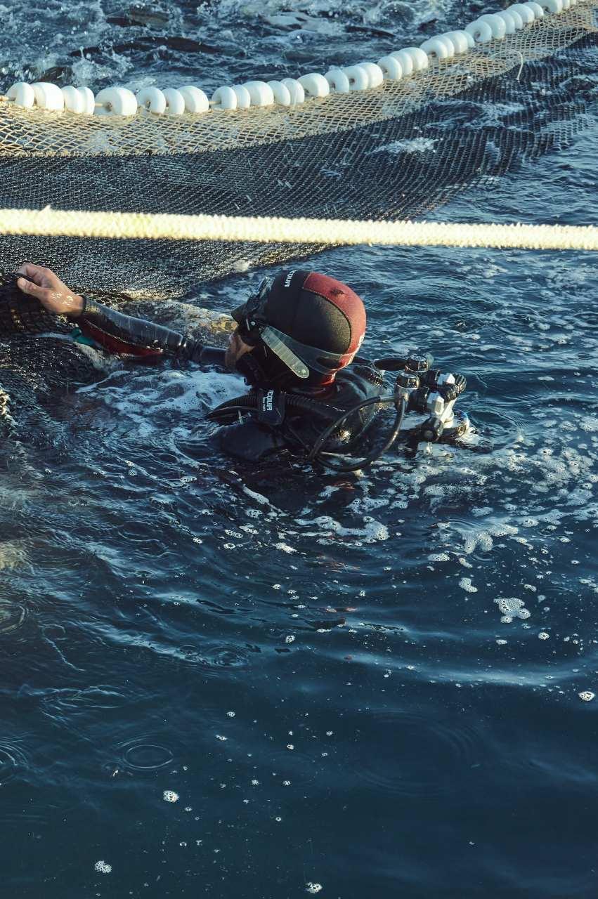 Buzo en acuicultura de españa