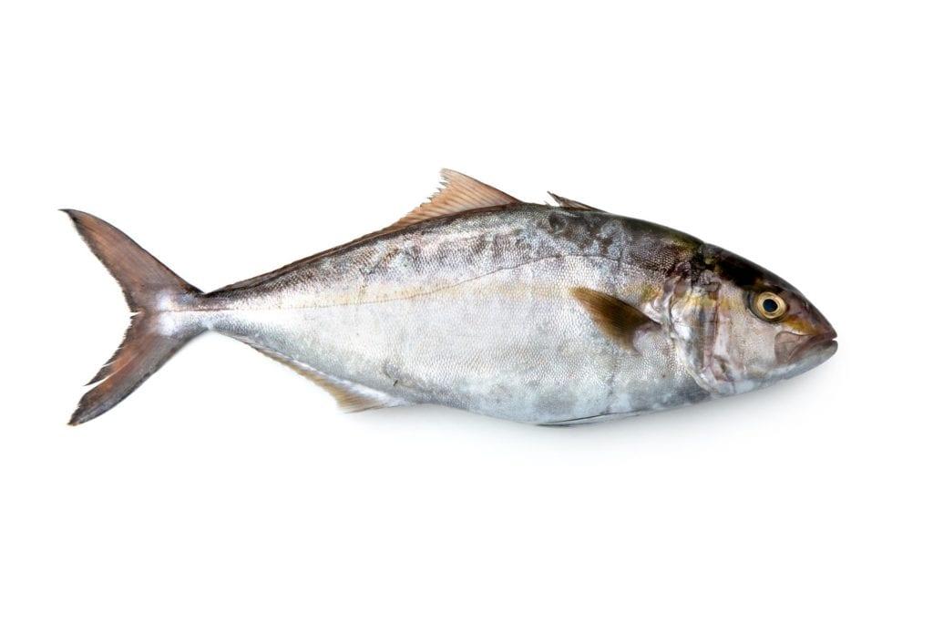 producto de acuicultura española seriola