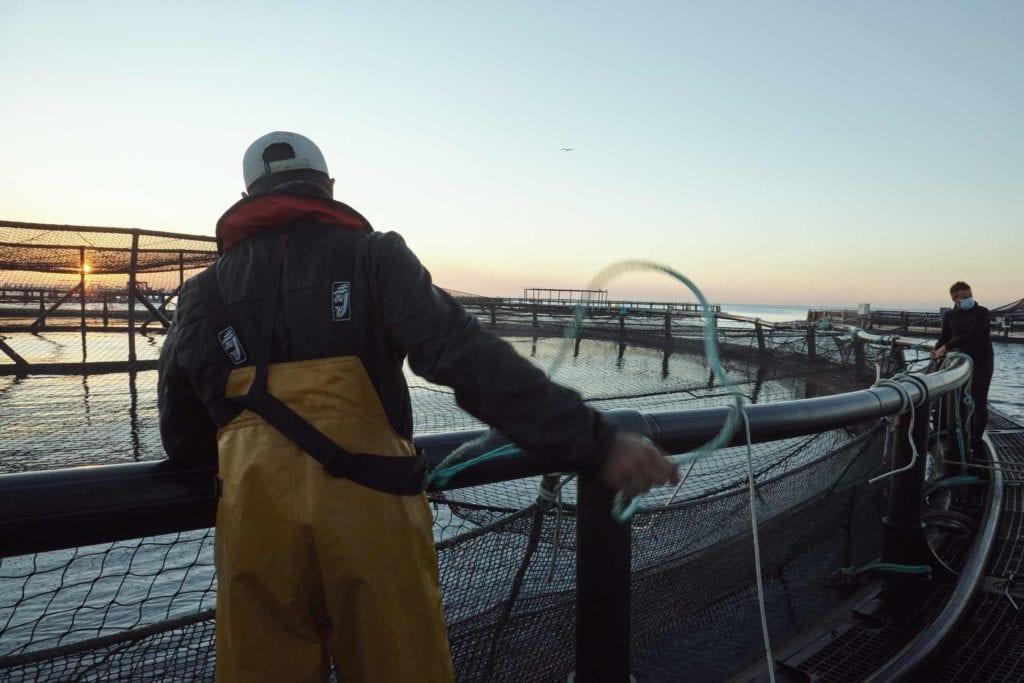 acuicultor trabajando en acuicultura española