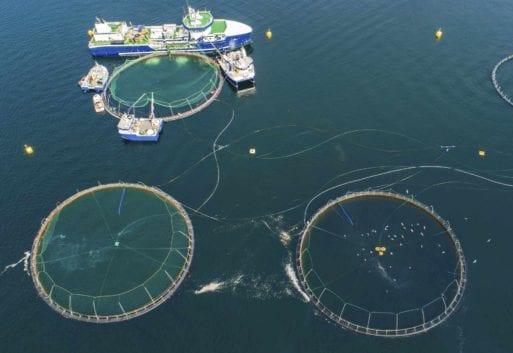 5,4 millones de mujeres del sector pesquero en todo el mundo