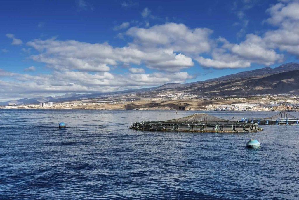acuicultura de españa