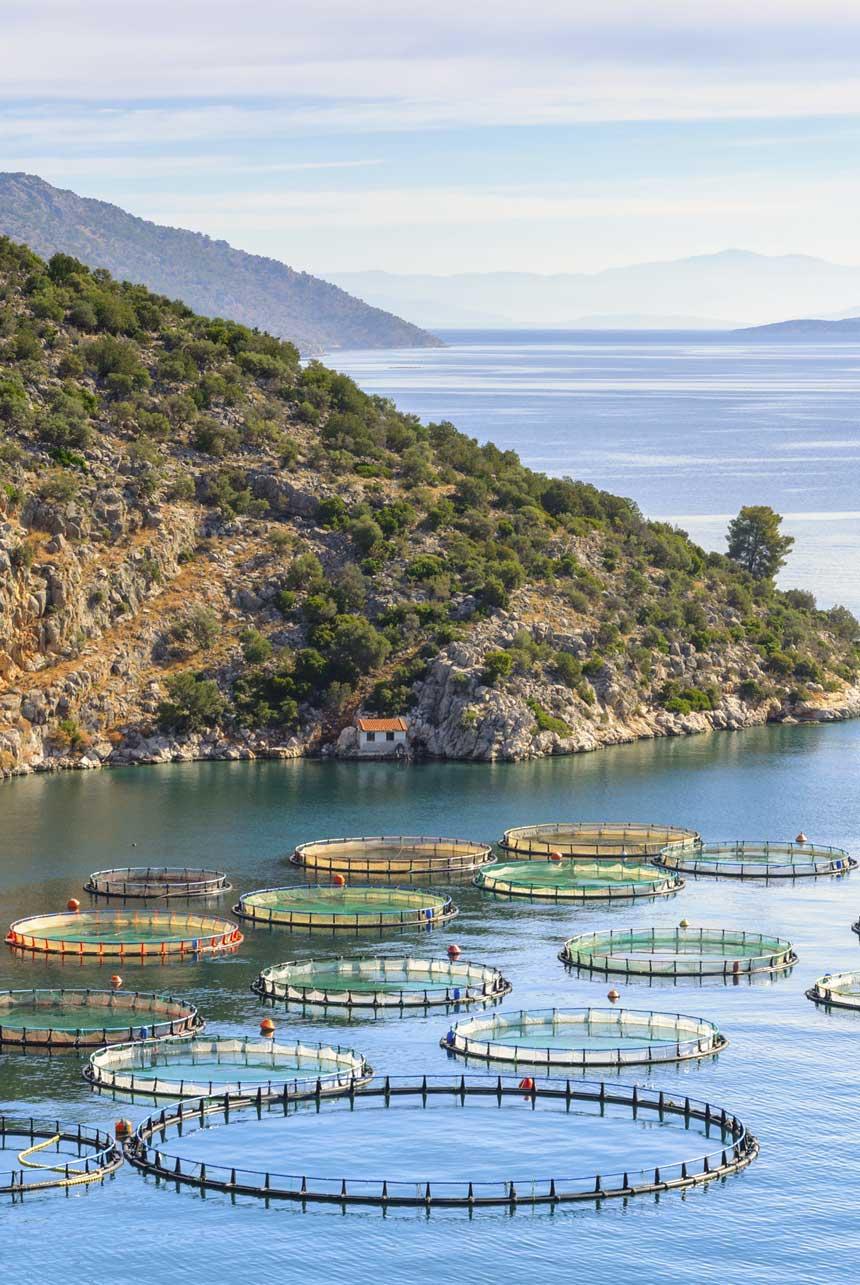 acuicultura de españa marina