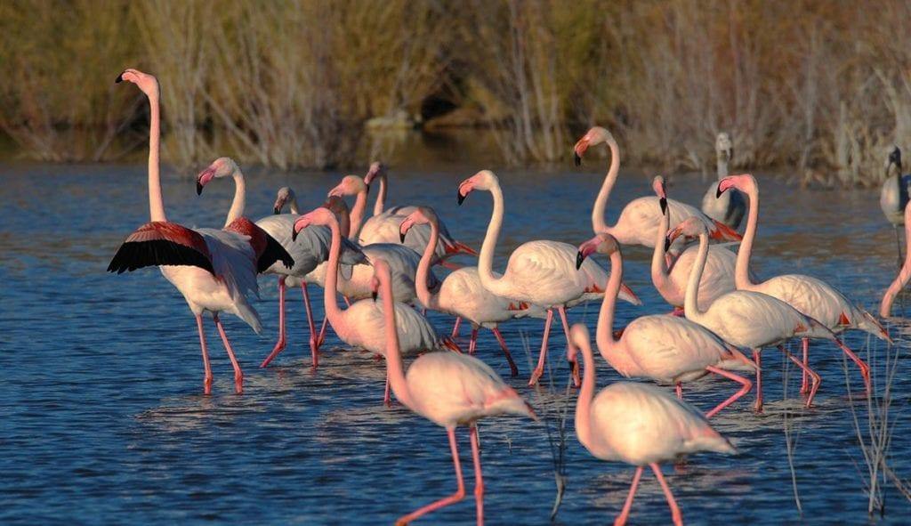 aves migratorias acuicultura de españa