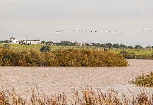Acuicultura y las aves migratorias