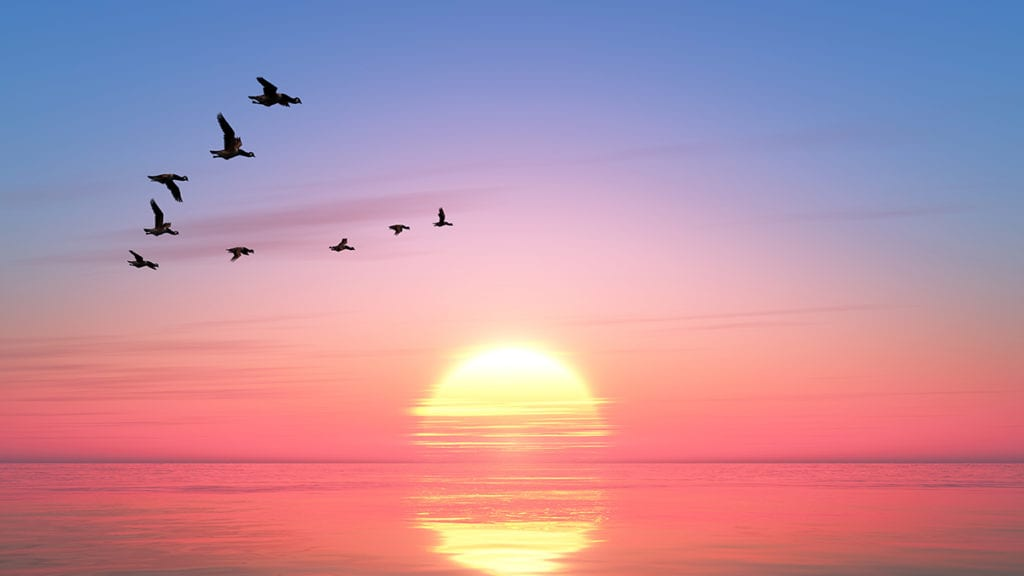 cielo rosa aves migratorias acuicultura de españa
