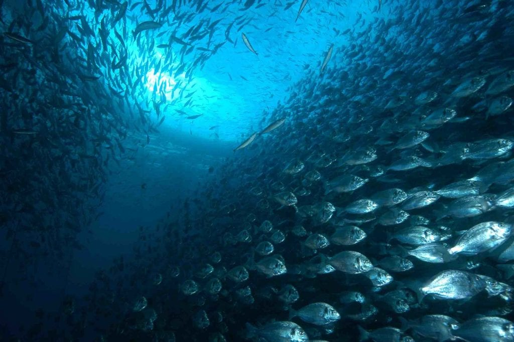 acuicultura de españa comida real carlos ríos