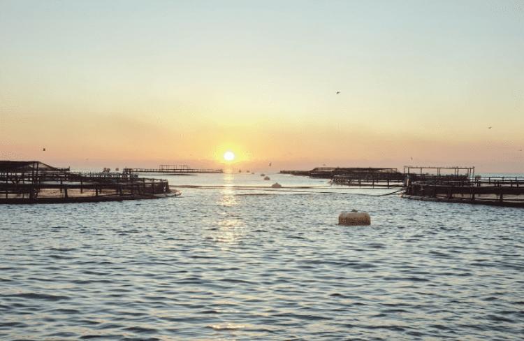 atardecer en acuicultura de españa