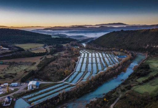 I+D en acuicultura: el gran desconocido