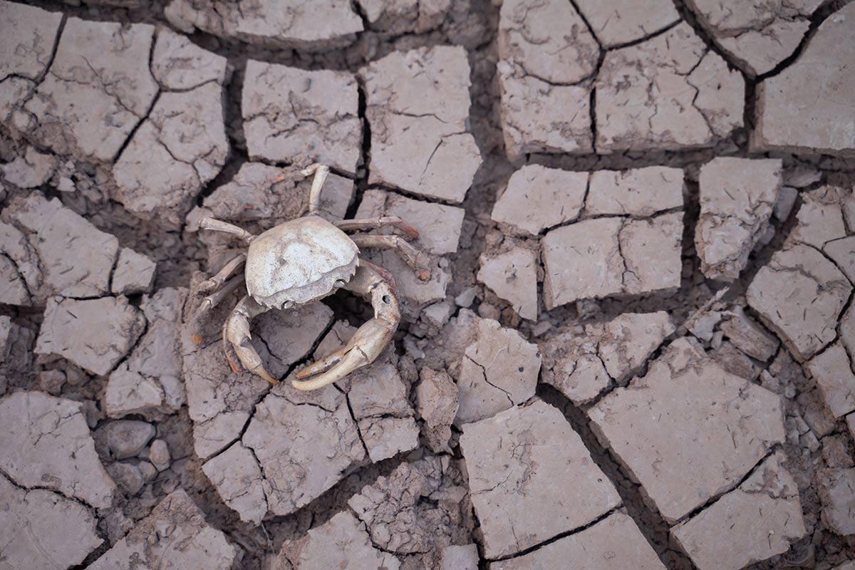 desertificación, terminar gracias a la acuicultura