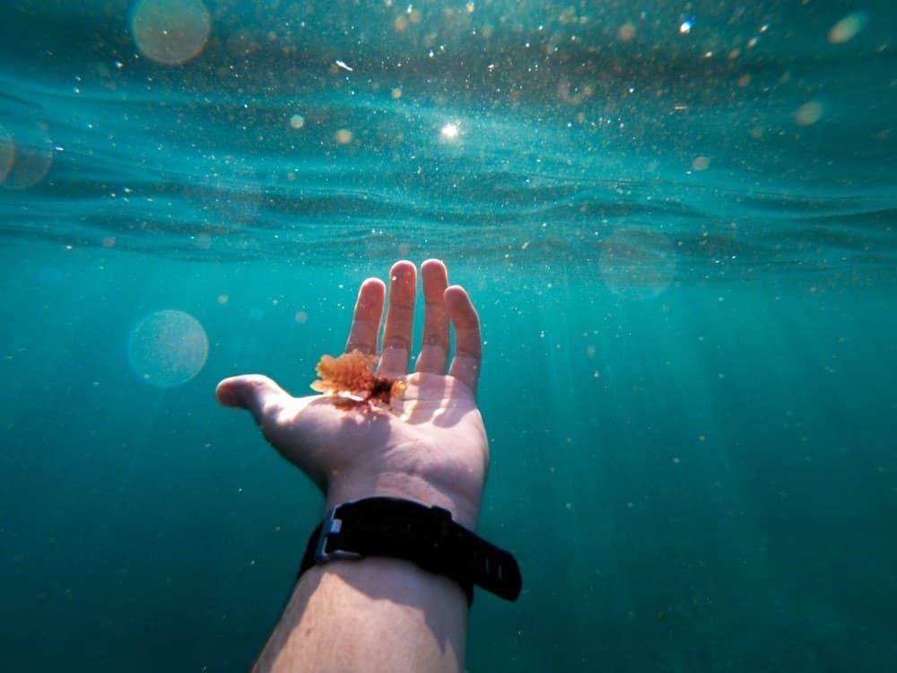 Mano en océano
