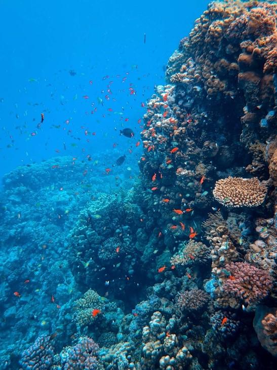 oceano coral