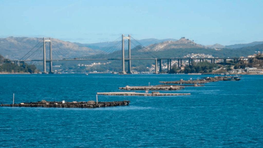 España, un filón para esta clase de acuicultura