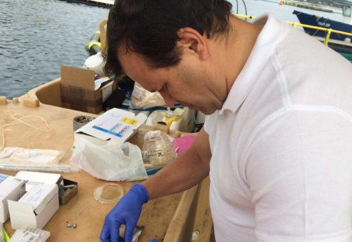 Medicamentos y vacunas en acuicultura; más allá del negocio sostenible