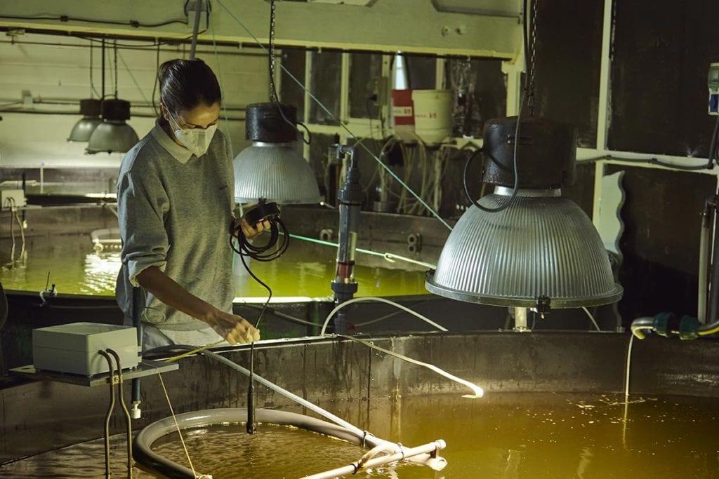 la importancia de la mujer en acuicultura