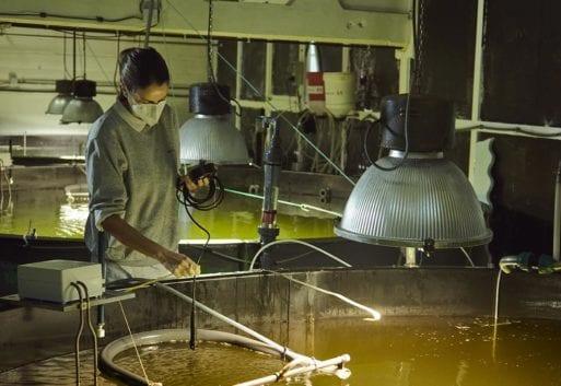 Mujeres en el sector pesquero: ¿Qué es la REMSP?